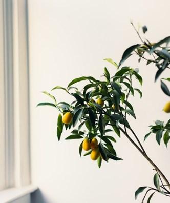植物性葉酸